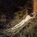 Arthur Rimbaud - entre poésie et photographie